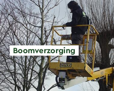 boomverzorging