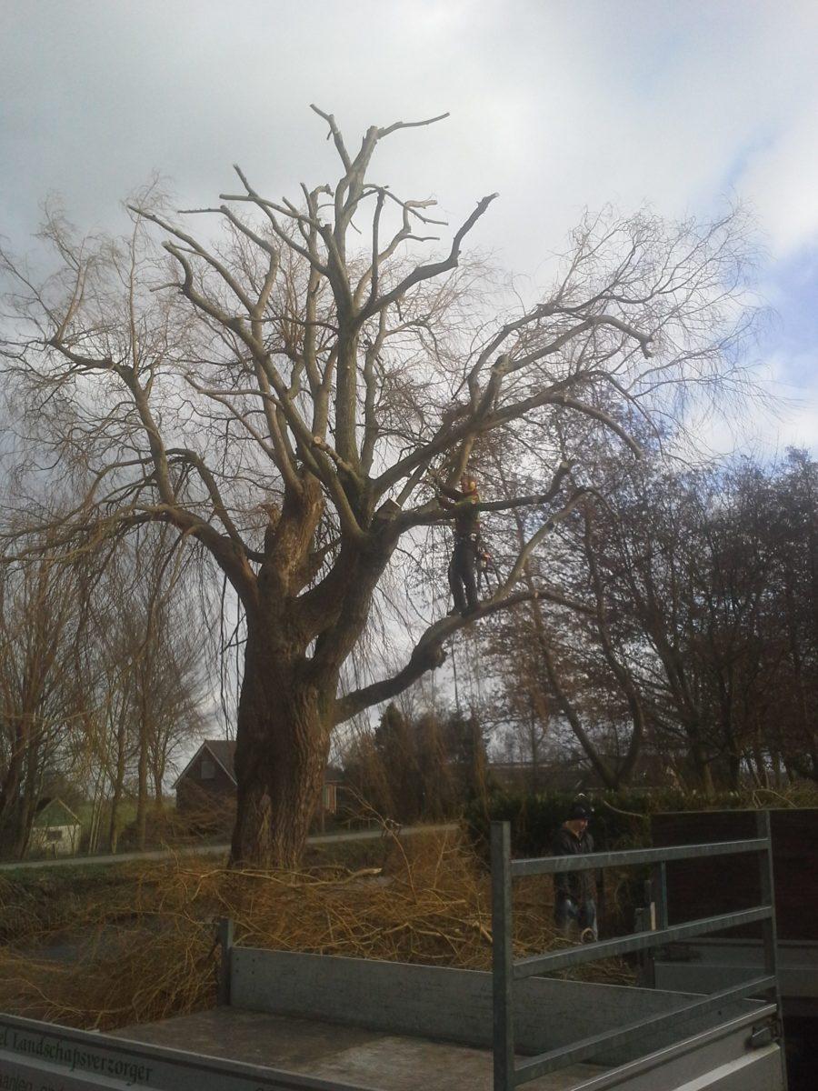 boom snoeien