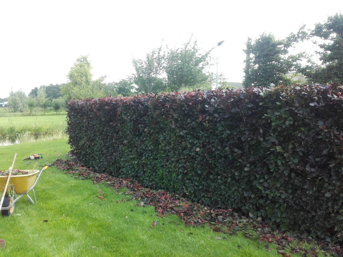 groot tuinonderhoud